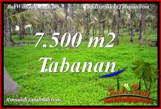 Affordable PROPERTY 7,500 m2 LAND FOR SALE IN TABANAN SELEMADEG BALI TJTB390