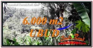 Affordable PROPERTY 6,000 m2 LAND SALE IN Ubud Payangan TJUB750