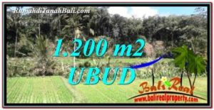 Affordable LAND SALE IN Ubud Tegalalang BALI TJUB746
