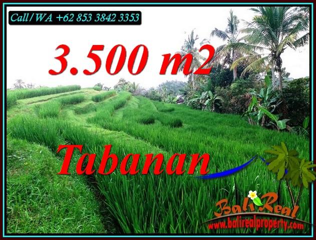 FOR SALE Affordable PROPERTY 3,500 m2 LAND IN SELEMADEG TIMUR TABANAN BALI TJTB500