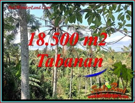 Affordable PROPERTY 18,500 m2 LAND SALE IN SELEMADEG BARAT BALI TJTB487