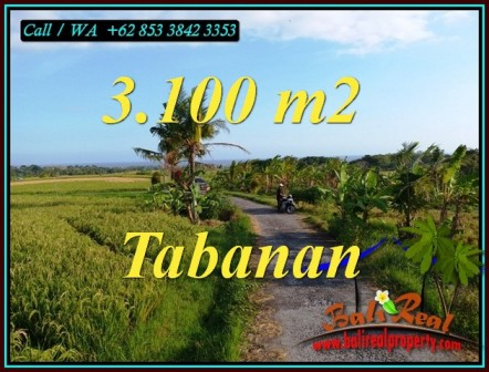 Magnificent PROPERTY 3,100 m2 LAND FOR SALE IN TABANAN TJTB496