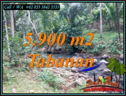 Affordable 5,900 m2 LAND FOR SALE IN SELEMADEG TABANAN BALI TJTB458