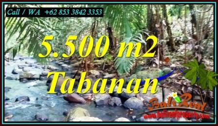 FOR SALE Beautiful 5,500 m2 LAND IN SELEMADEG BALI TJTB470